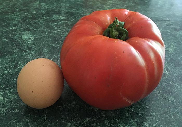 TomatoVsEgg