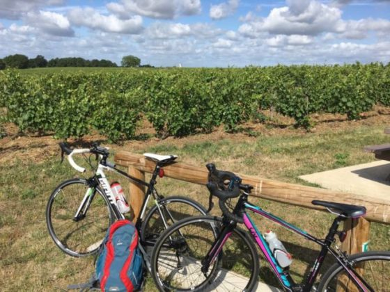 Cycling in La Loire. Wine-growing region