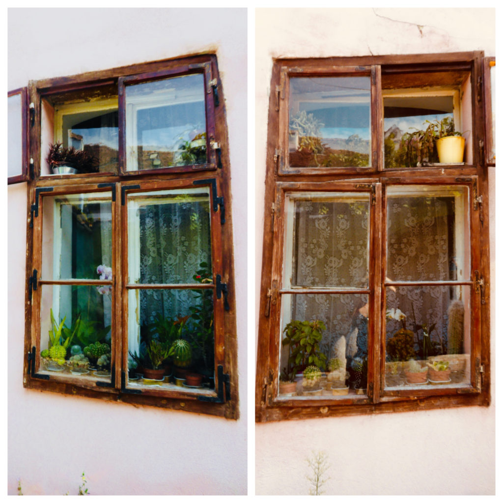 Lacy-curtained windows decorated with pots of plants.