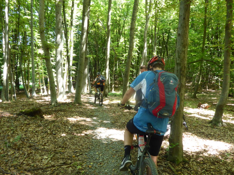 Mountain bike trails in forest