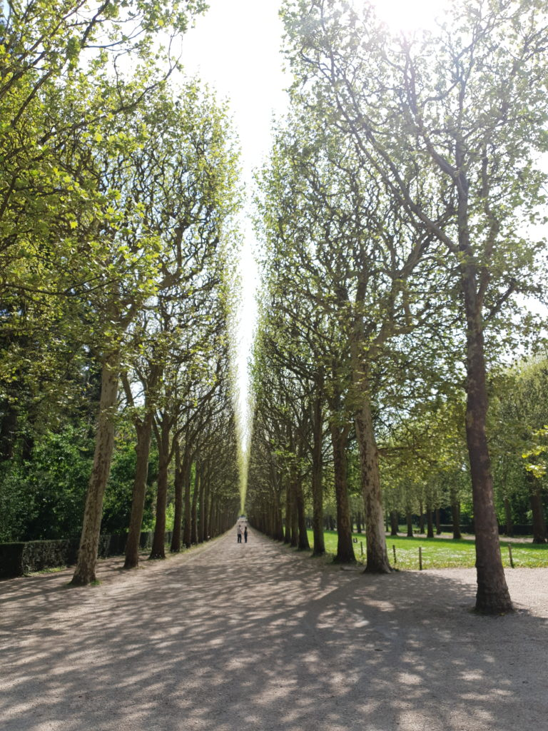 Play of light on the trees in Parc de Sceaux