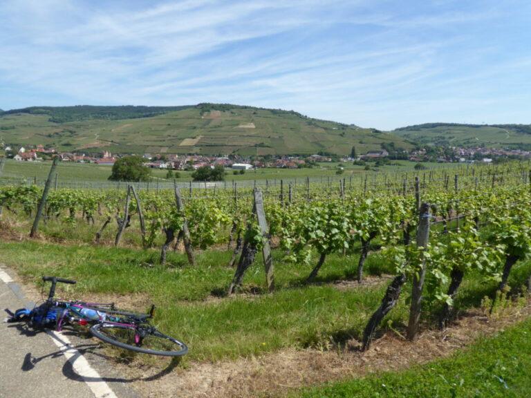 Blue Sky Vineyard Epernay