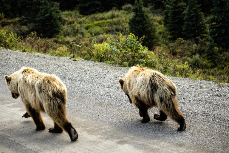 Followed by 2 other smaller bears